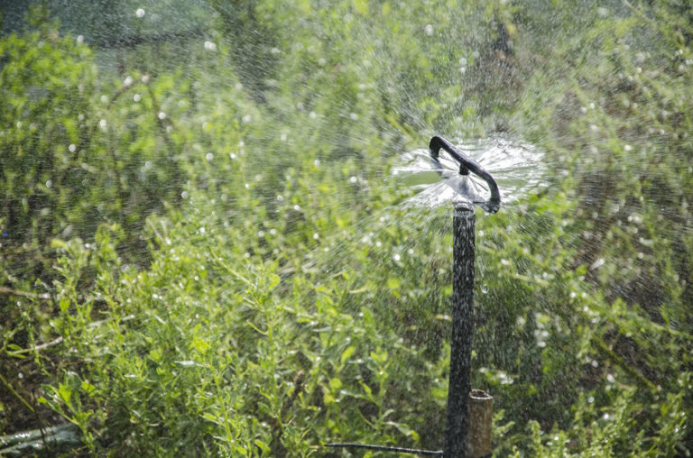 Irrigatore a vaporizzazione (25 pz) IRRIG