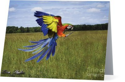 Parrots Take Flight I (horizontal) 00002