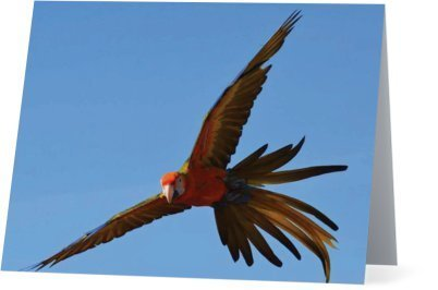 Parrots Take Flight II (horizontal) 00003