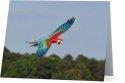 Parrots Take Flight III (horizontal) 00004