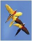 Parrots Take Flight IV (vertical) 00005