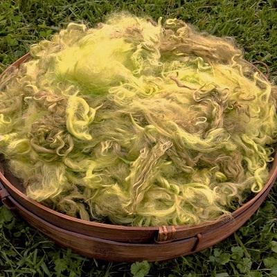 Hand-Dyed Suri Alpaca Fiber, 5 Inches, Wattle