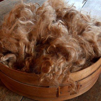 Suri Alpaca Fiber, 4 Inches, Medium Fawn, Savannah