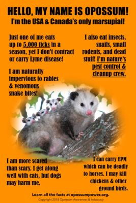 Opossum Poster / Possum Poster (2 sizes)