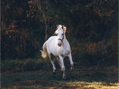 Картина на холсте Лошадь