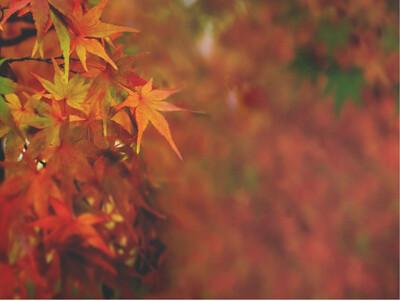 Картина на холсте Осень
