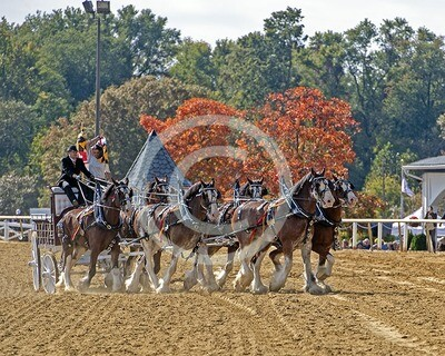 Suttler Post Farm Clydesdales