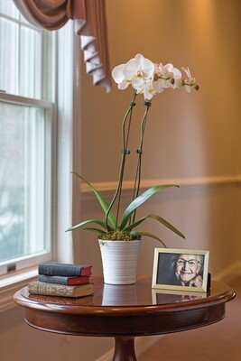 Double Stem Orchid Plant