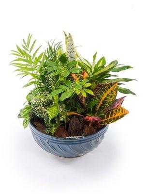 Dish Garden 3 in Ceramic Container