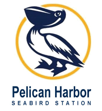 Healing Wildlife at the Pelican Harbor Seabird Station (00/00/00)