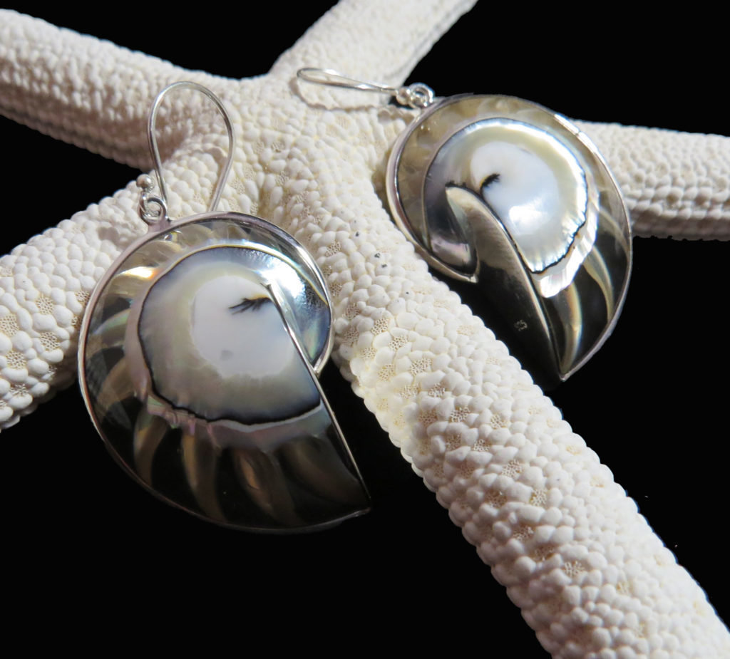 Light Blue Nautilus Shell Earrings
