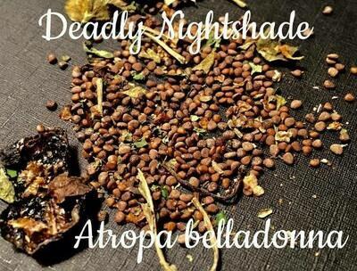 Belladonna Seeds