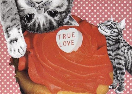 True love cats 5 x 7