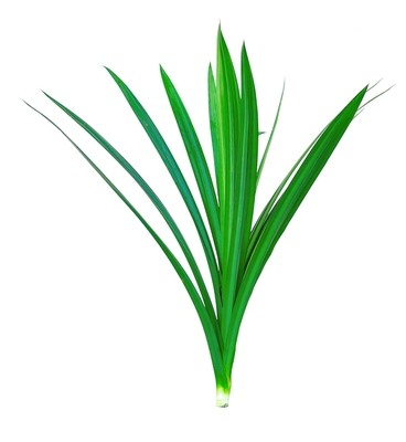 Fresh Pandan Leaves - 1.5 oz