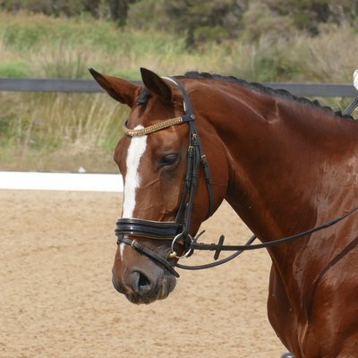 Gold Snaffle Bridle