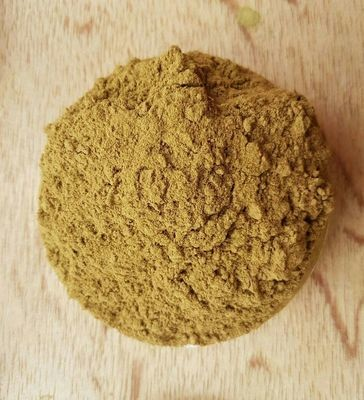 Bent (Fermented Red MD) Powder 1 KG
