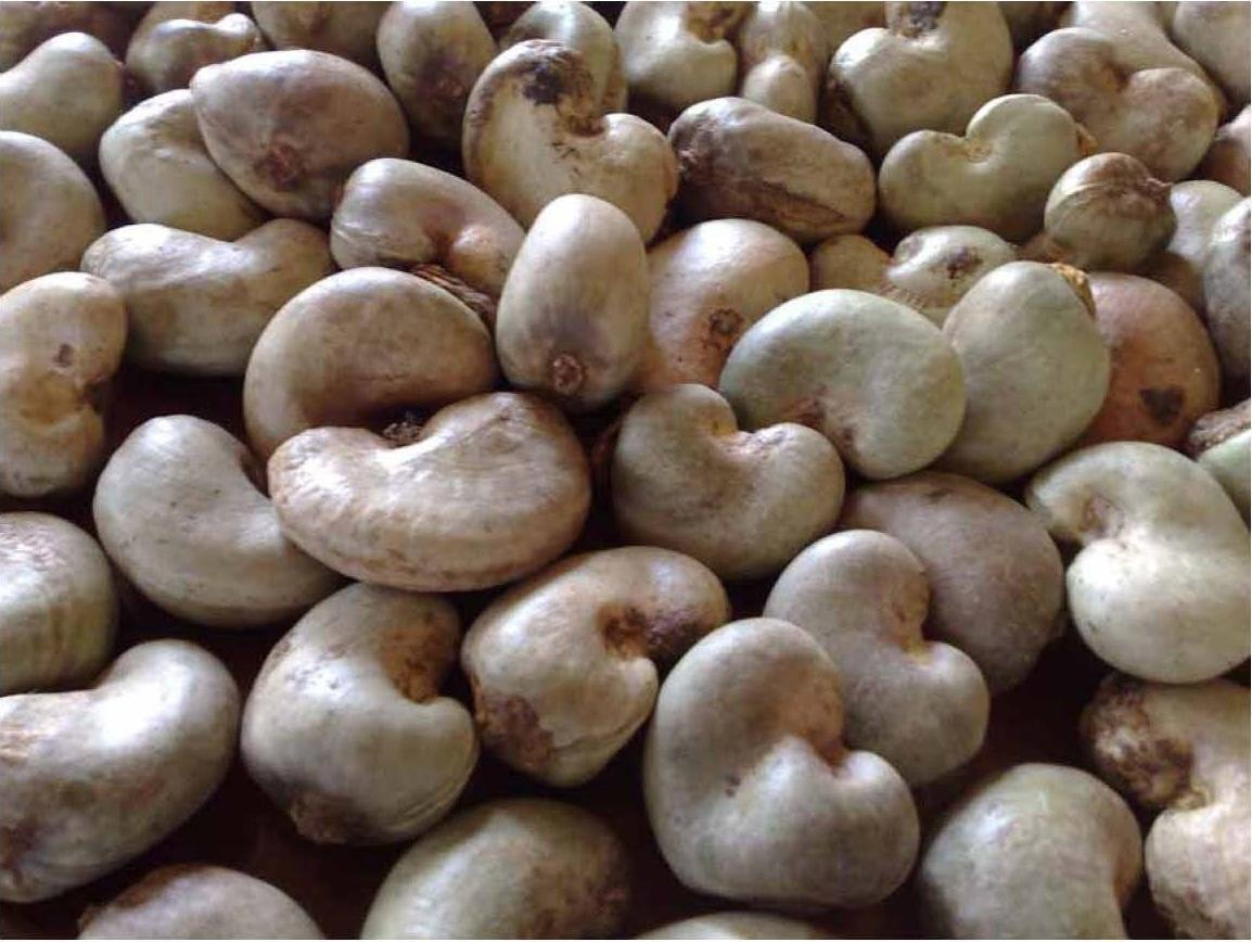 RAW CASHEW NUTS 0006