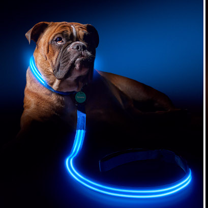 Light Up Leash & Collar Set
