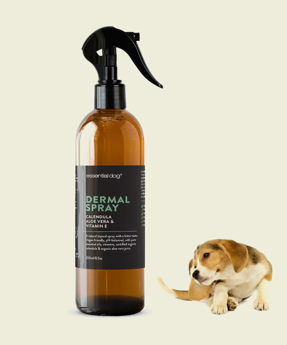 Dermal Scratch Spray for Dogs: Aloe Vera, Calendula & Vitamin E 00035