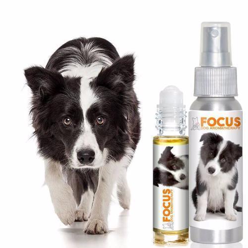 Focus - Aromatherapy Spray 00112