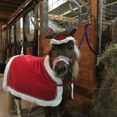 Christmas Parade Blanket for Mini's