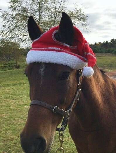 Christmas Set for Large Pony and Horse