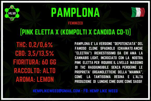 Pamplona, 3 semi femminizzati da collezione