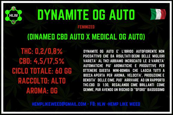 Dynamite OG Auto, 3 semi femminizzati da collezione
