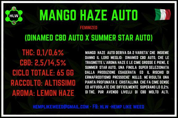 Mango Haze Auto, 3 semi femminizzati da collezione