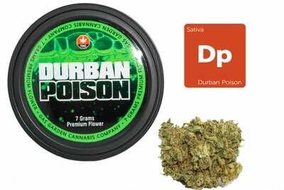 Durban Poison (7g Premium Flower Tin Can) By Gas Garden