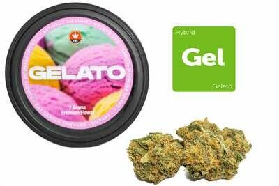 Gelato (7g Premium Flower Tin Can) By Gas Garden