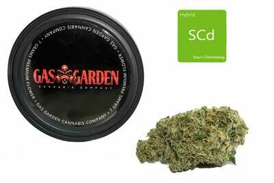 Sour Chemdawg (7g Premium Flower Tin Can) By Gas Garden