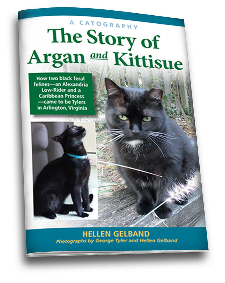 A Catography: The Story of Argan and Kittisue