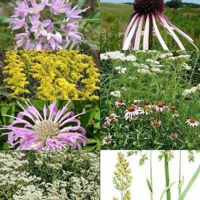 Prairie Medicinals Kit, Full Sun, Dry/Mesic