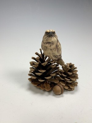 Bird on Pinecones