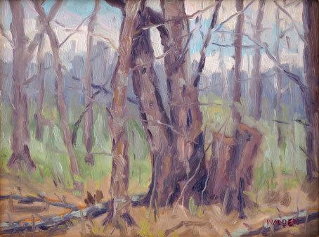 Woodland Interior 2 00109