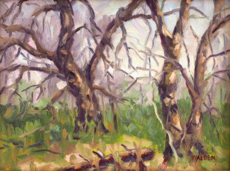 Woodland Interior 6 00113