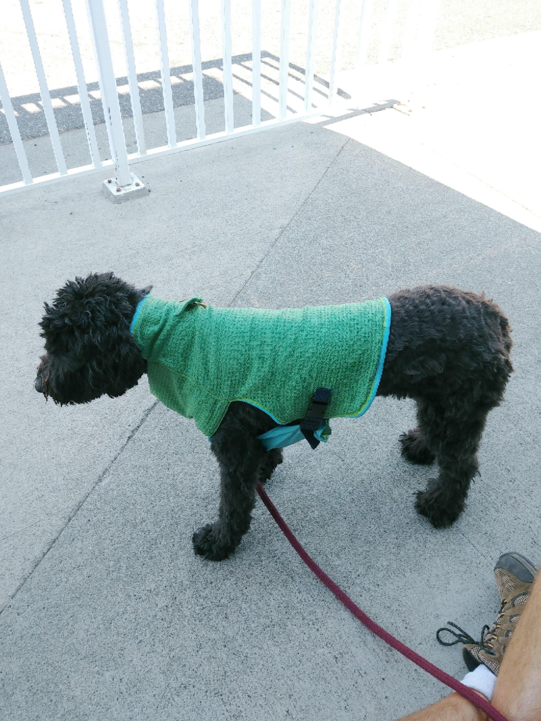 The Cooler Vest