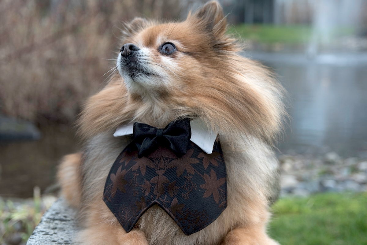 Wedding Special Occasion Dog Tuxedo Vest