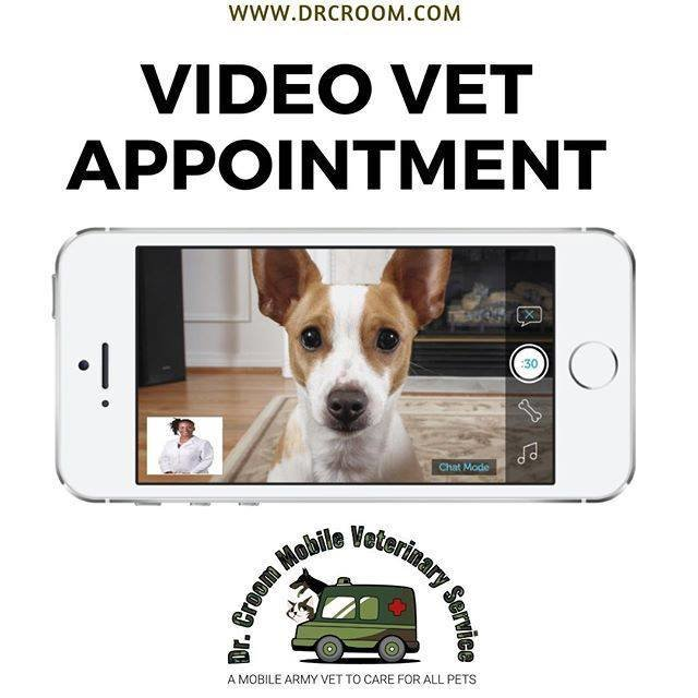 Video Veterinary Appointment--15 minutes