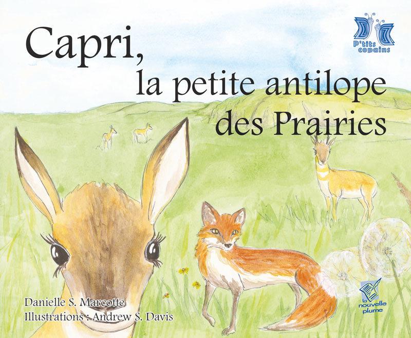 Capri, la petite antilope des Prairies 00001755