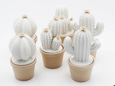 Bomboniera Ilary Queen Cactus led Pz. 3