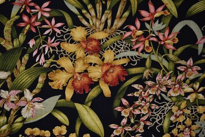 Wild Orchid-Black