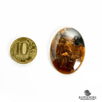 Аммонитовый симбирцит 35*30*3 мм