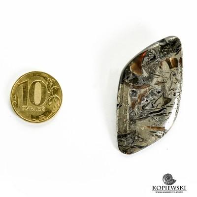 Аммонитовый симбирцит 50*25*3 мм