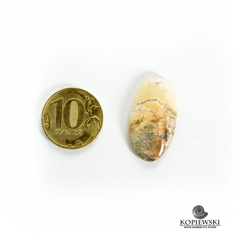 Аммонитовый симбирцит 30*15*3 мм