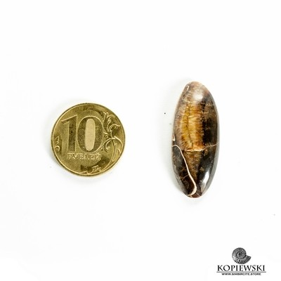 Аммонитовый симбирцит 35*15*3 мм