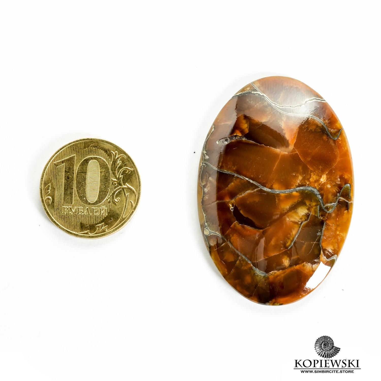 Аммонитовый симбирцит 50*30*3 мм