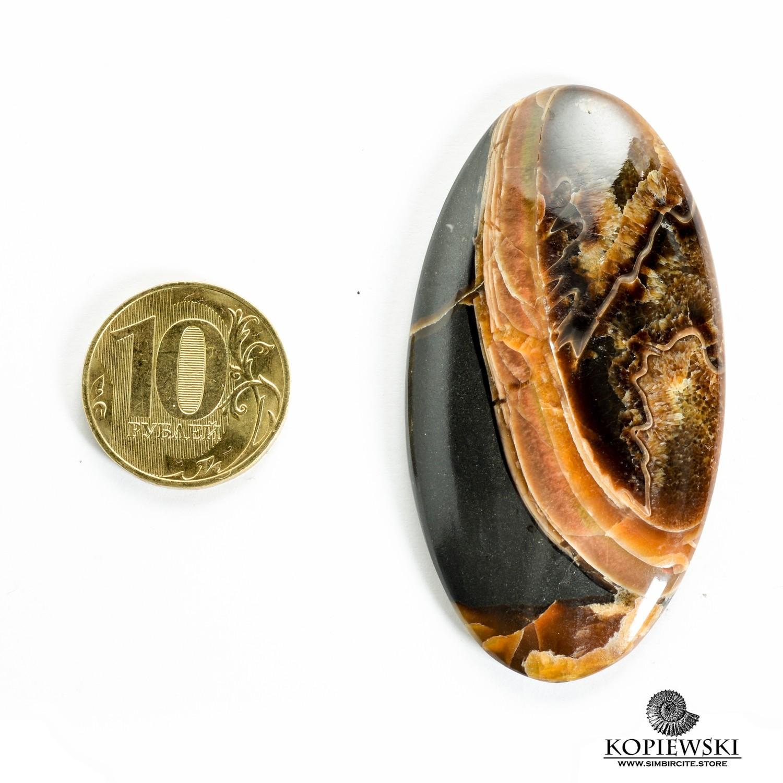 Аммонитовый симбирцит 65*35*3 мм