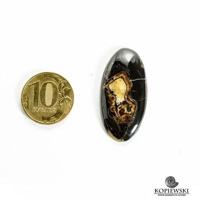 Аммонитовый симбирцит 40*20*3 мм